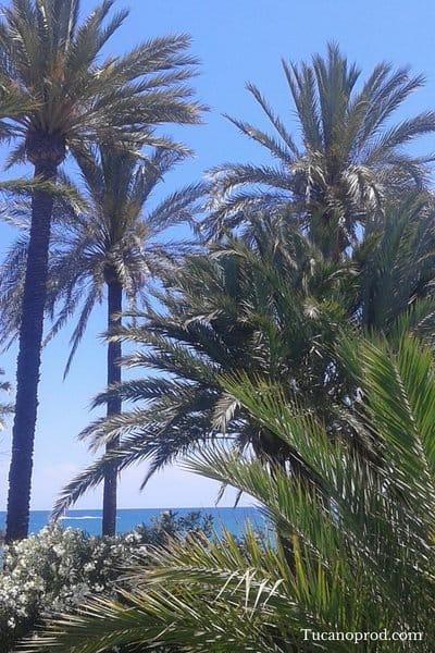 Spanyol egyéni vállalkozás megalapitása
